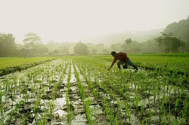 farmář na poli